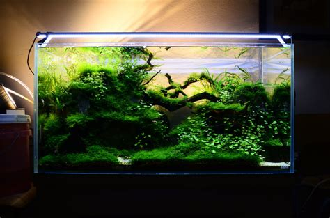 Aquascape Designs For Aquariums by Freshwater Aquarium Aquascape Design Ideas Aquascape