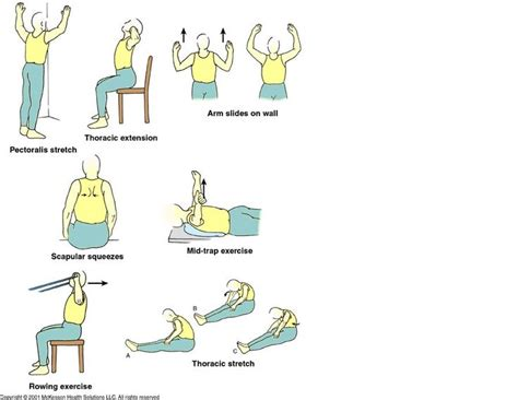 17 best images about physical therapy exercises for lower back on back