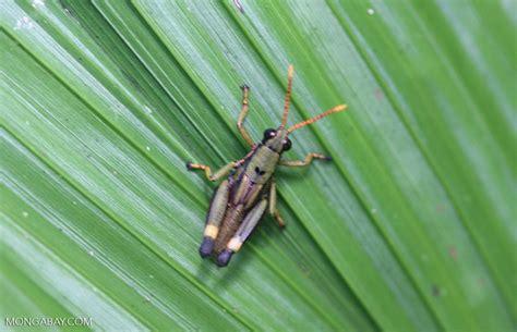 colorful grasshopper colorful grasshopper