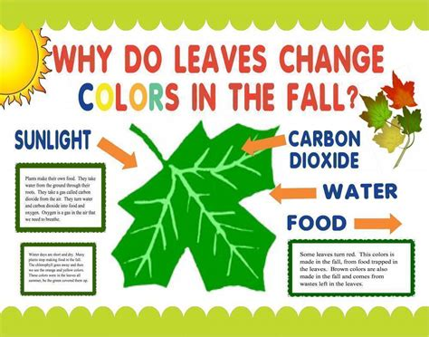 how do leaves change color make a science fair project poster ideas why do leaves