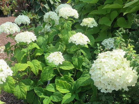 garden advice linden hill gardens jerry fritz garden