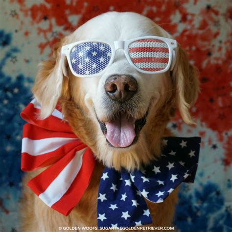 patriotic puppy patriotic a safe fourth of july golden woofs