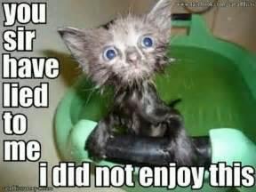 Wet Cat Meme - wet cat funny things pinterest