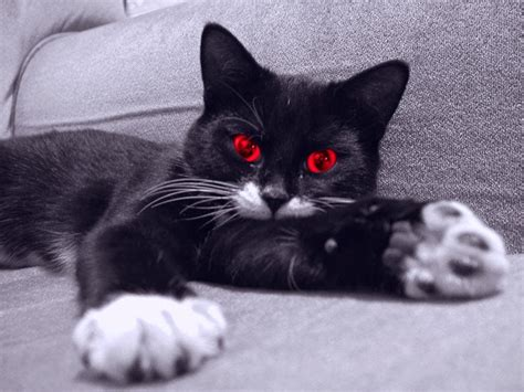 scary cat the most scary cat n3os3r