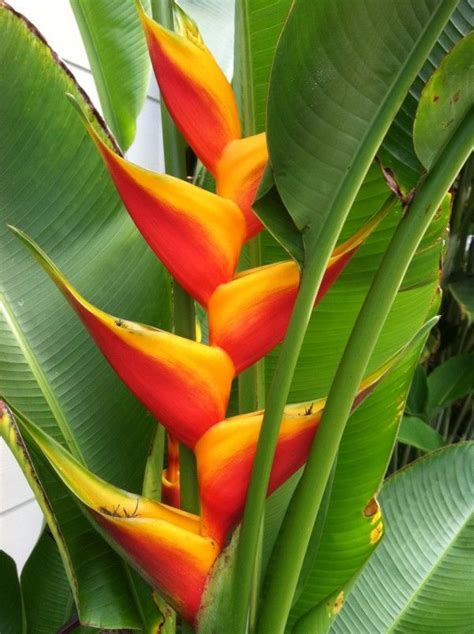 tropical plant names and pictures 10 best images about plant design on tropical