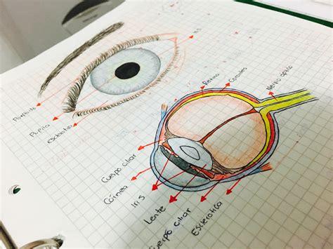 imagenes de los ojos y sus partes ojo humano y sus partes anatomy pinterest ojo humano
