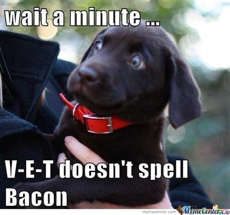 Dog Vet Meme - things you spell instead of say v e t darwin dogs