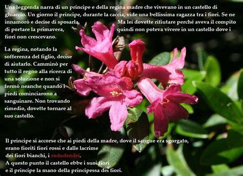 trama il linguaggio segreto dei fiori simbolo di eleganza bellezza e temperanza foto di
