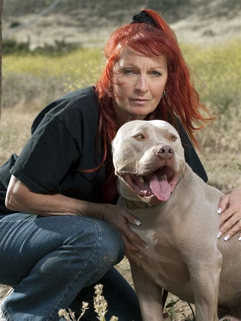 pitbulls and parolees dogs pit bulls and parolees dogs breeds picture