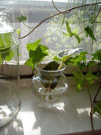 Special Edition Kebun Tanaman Mini Garden indoor water garden growing plants in water year