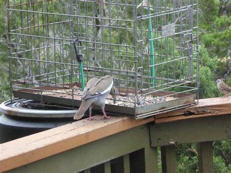 81 best platform bird feeder plans images on