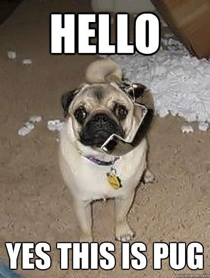 hello pug hello yes this is pug memes quickmeme