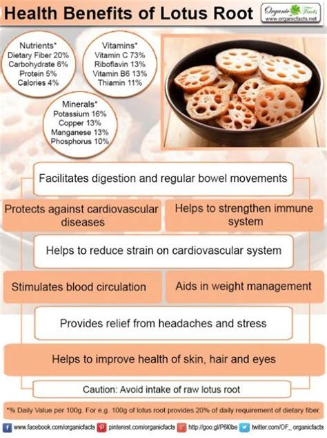 benefits of lotus root nutrition chips