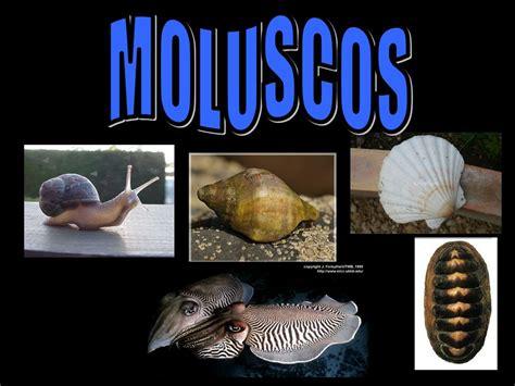 imagenes de animales moluscos moluscos ppt descargar