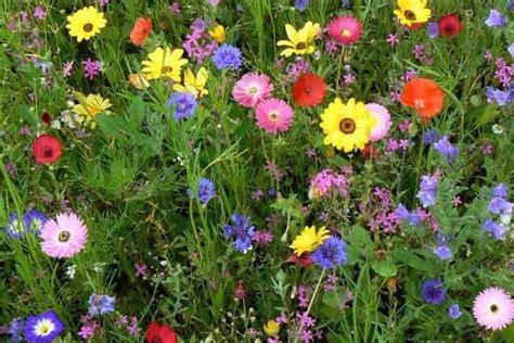 compo di fiori fiori di co casa fonsi