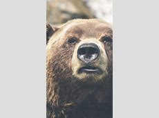 Wallpaper Brown bear, bear, cute animals, funny, Animals #5376 2015 Movies