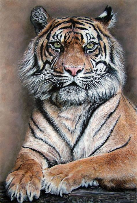 drawing and painting animals 178221321x stefano zagaglia artist kitty