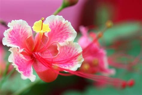 blue iris florist free flower delivery in houston are hibiscus flowers poisonous to dogs gallery flower