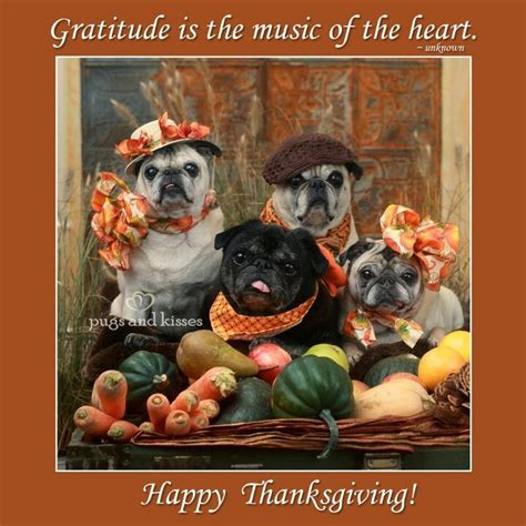 happy thanksgiving pug happy thanksgiving pugs 2012 animals