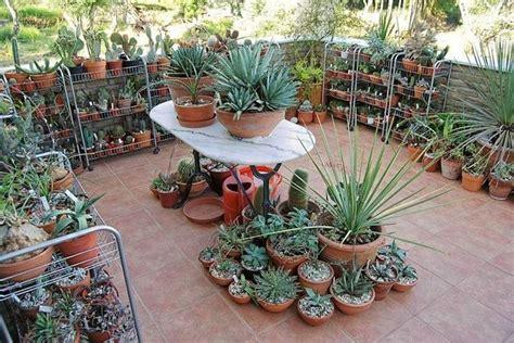 piante grasse pendenti con fiori piante grasse da balcone le piante grasse piante