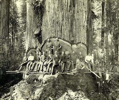 mills of humboldt county 1910 1945 images of america books cathedral grove big trees pictures politics big