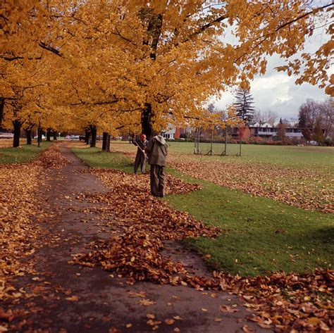why fall is the best season why fall is the best season for running jess runs