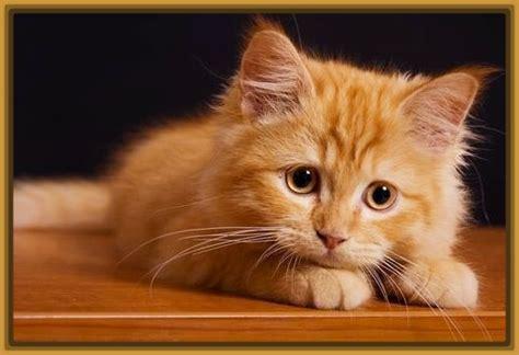 imagenes de gatos tristes con mensajes fotos de gatos tristes para descargar gatitos tiernos
