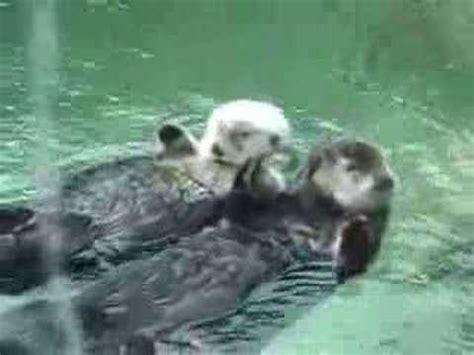 otter schlafen otters holding
