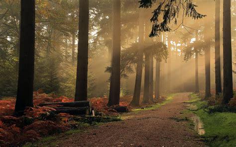 landscape nature mist dirt road forest shrubs