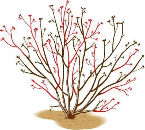 bäume im topf 5247 die besten 25 obstb 228 ume schneiden ideen auf