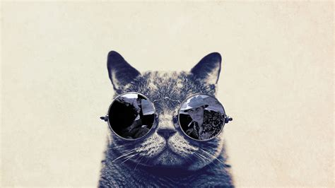 wallpaper cat 3d glasses cat with glasses fear in vegas wallpapers and images