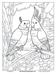 birds book one 171 animal coloring pages for kids