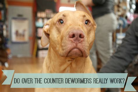 how often do you deworm a puppy do the counter dewormers for pets really work autos post