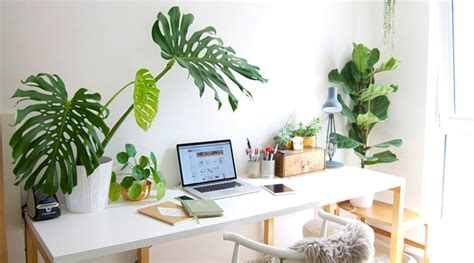 piante da ufficio 10 piante da ufficio migliorano l e l umore 10