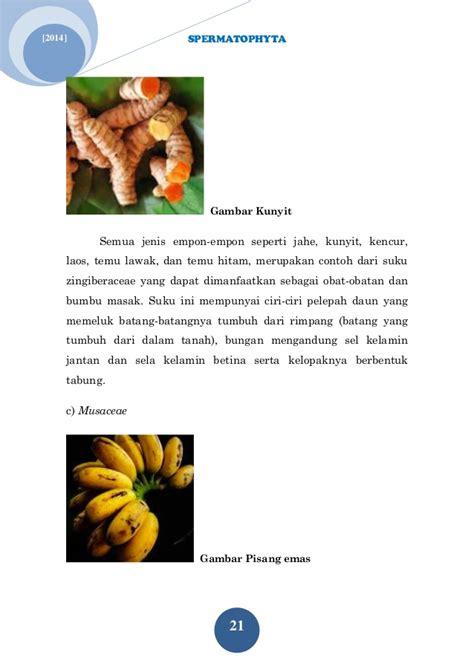 Obat Rumput by Buku Tumbuhan Berbiji