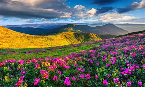 desktop wallpaper hd 1280 x 768 spring mountain landscape flowers purple colored hills