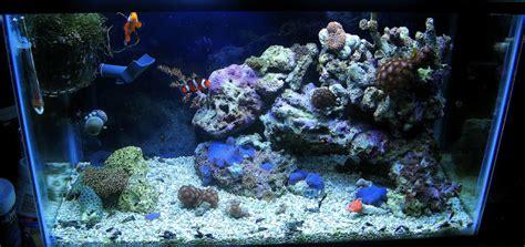 Penguin General Tank Tb 200 Blue tharsis sw tank 10 gallon new pics 6 21 11