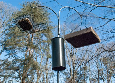 squirrels poles and baffles birdseed binoculars