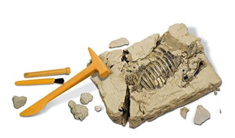 il triceratopo in giardino geoworld cl122k dino excavation kit triceratopo scheletro