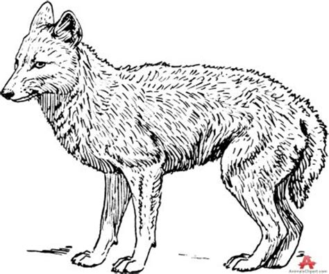 coyote clipart white wolf clipart coyote pencil and in color white wolf