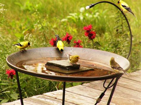 hummingbird bird bath mister birdcage design ideas
