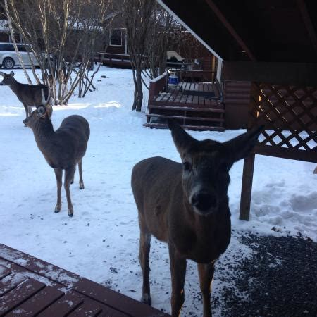 Friendly Kitchen Deer Park by Friendly Deer Picture Of Tallpine Lodges West Hawk Lake Tripadvisor