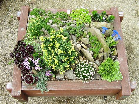 Gardening Ideas Rock Garden Ideas For Your Lovely House Midcityeast
