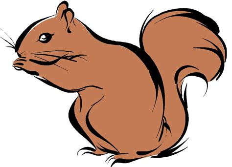 Drawing Clipart by Squirrel Drawing Squirrel Drawing Menmadeho