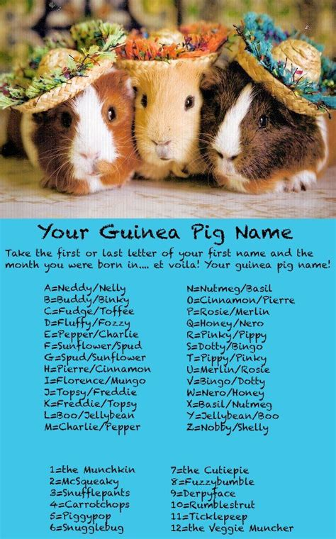 your guinea pig name guinea pig pinterest guinea