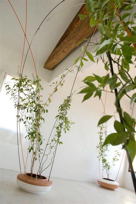climbing wall plants wall climbing plant home walls deco paredes de casa