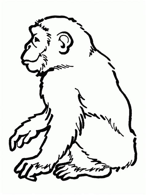 Chimpanzee Coloring Pages free printable chimpanzee coloring pages for