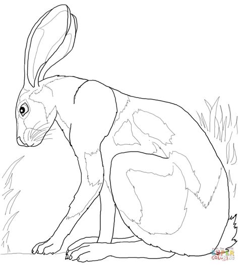 coloring pages jack rabbit desert hare coloring page supercoloring com