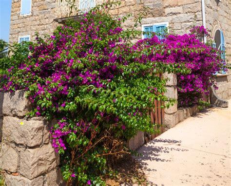 geniale wohnideen steinmauer garten mediterran die besten steinmauer garten