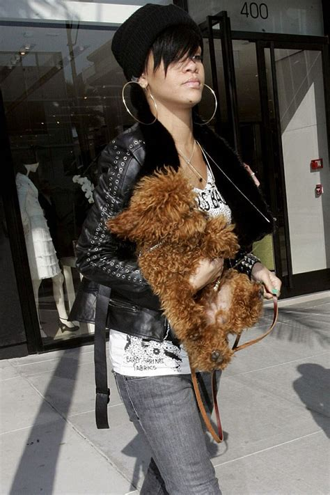real rottweiler rescue phone number miley cyrus and emu coyne shrine to floyd uk